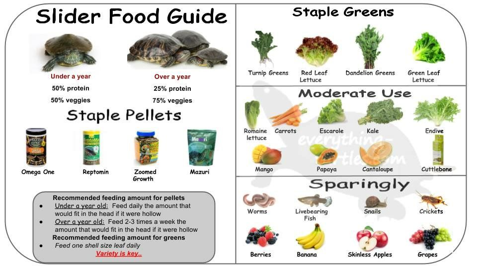 Red Earred Slider Food Guide What Can Turtles Eat Slider Recipes Water Turtle Turtle Care