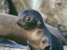 Los animales bebes más tiernos: fotografías que te harán suspirar   Fotografía