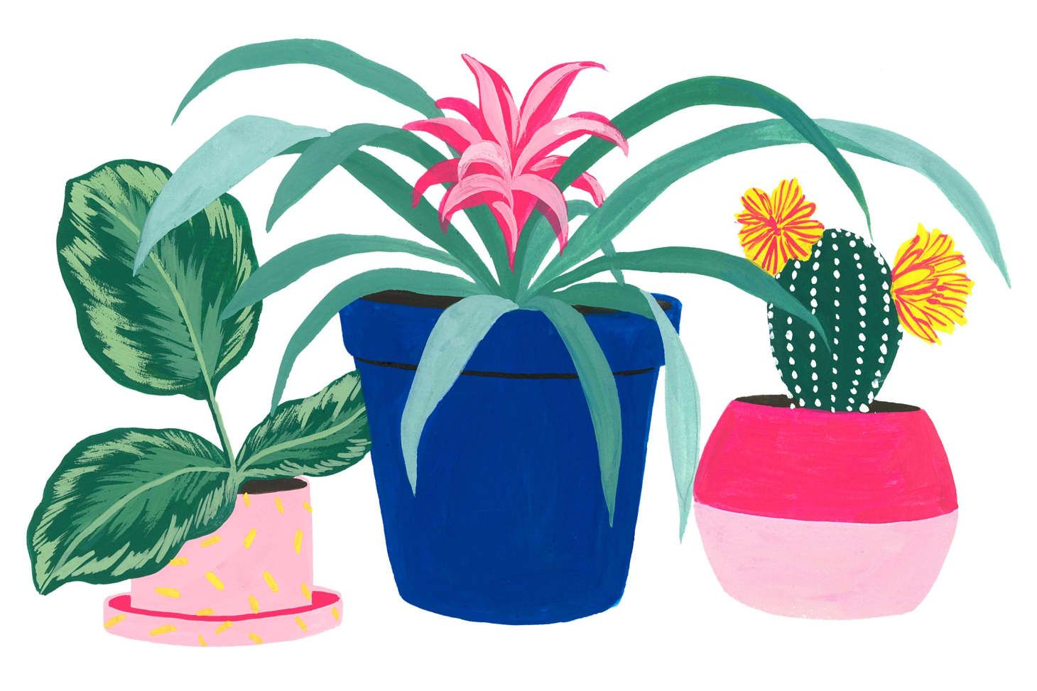 The A To Z Guide To Common Houseplants Common House