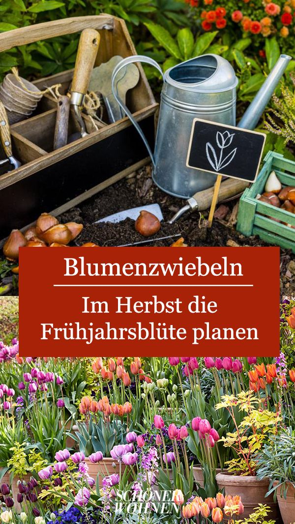 Blumenzwiebeln pflanzen: Im Herbst die Frühjahrsblüte planen