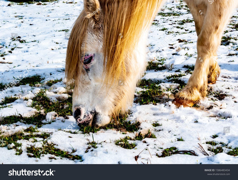 Photo of Caballo, vida silvestre, tierras de cultivo, Alemania: un bonito molde de caballo en el pasto de invierno …