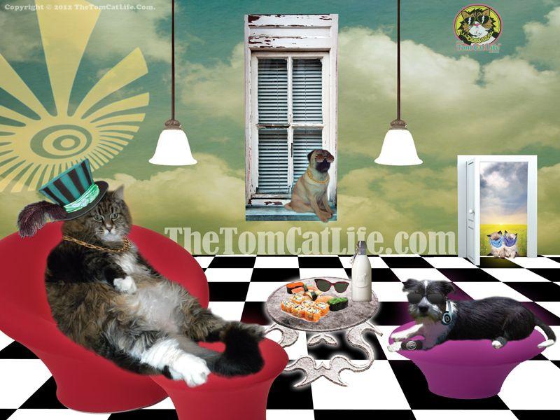 "Tom Cat in ""Wonderland"" from www.TheTomCatLife.com"