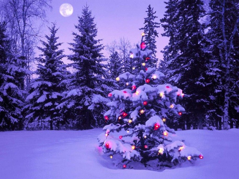 The Best Outdoor Christmas Tree Decorating Light Ideas Stunning