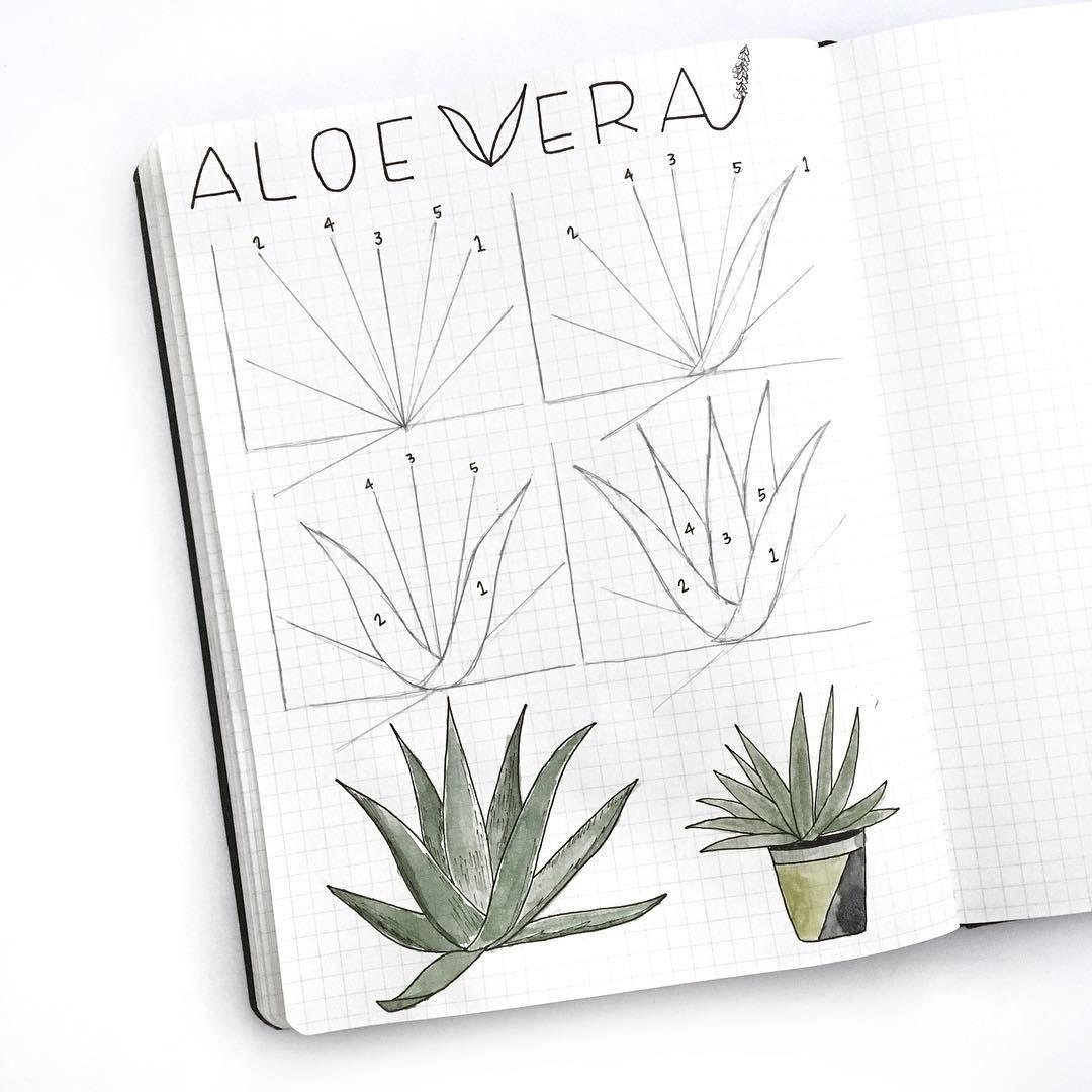 Aloe Vera Plant En 2019 Dessins Faciles Dessins Simples