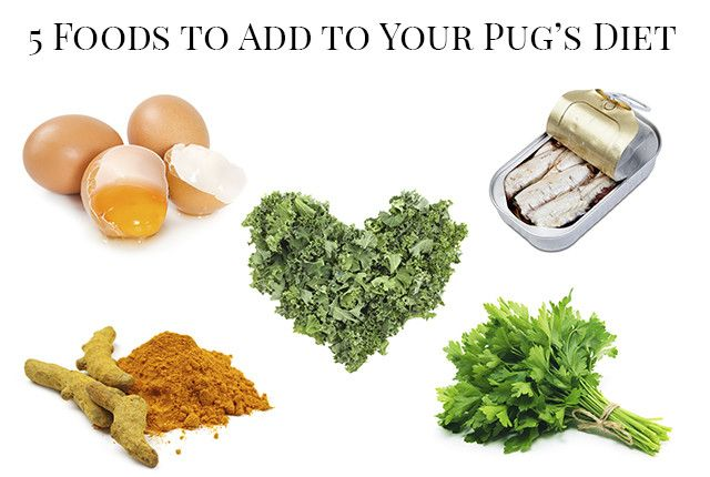 5 Foods To Add To Your Pug S Diet Food Pugs No Cook Meals