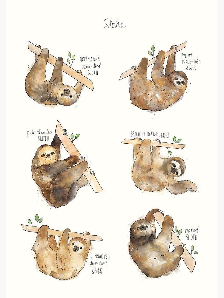 Sloths Canvas Print By Amy Hamilton In 2020 Sloth Sloth Art Cute Sloth