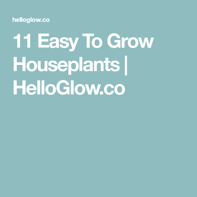 11 Easy To Grow Houseplants Houseplants and Healthy living