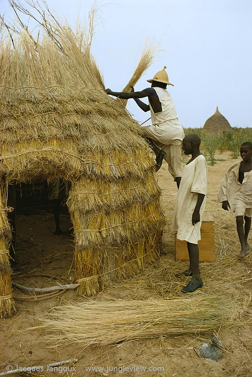 Men Making A Thatch Hut In Kanem Chad Africa The Kanembu House Is