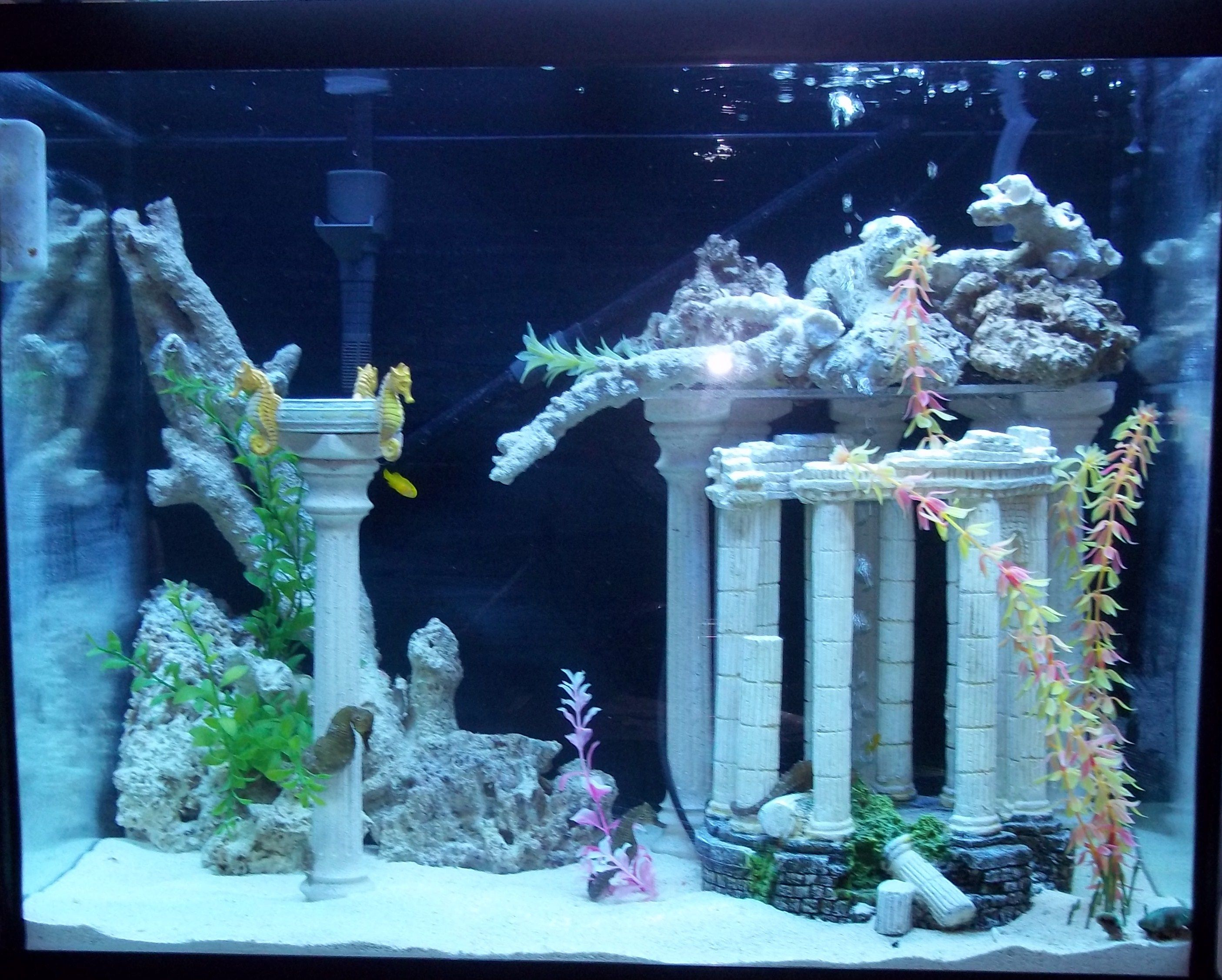 Sea horse tanks seahorse tank top 56g seahorse tank for Idee deco aquarium