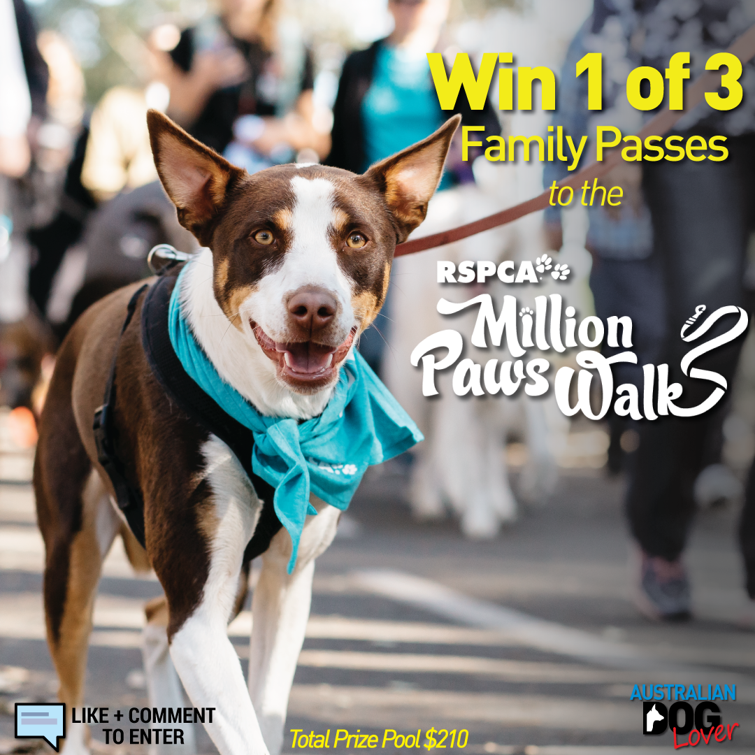 Win 1 of 3 Family Passes to RSPCA Million Paws Walk 2019