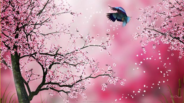 Japanese Cherry Flower Wallpaper Hd Cherry Blossom Wallpaper Sakura Painting Cherry Blossom Art