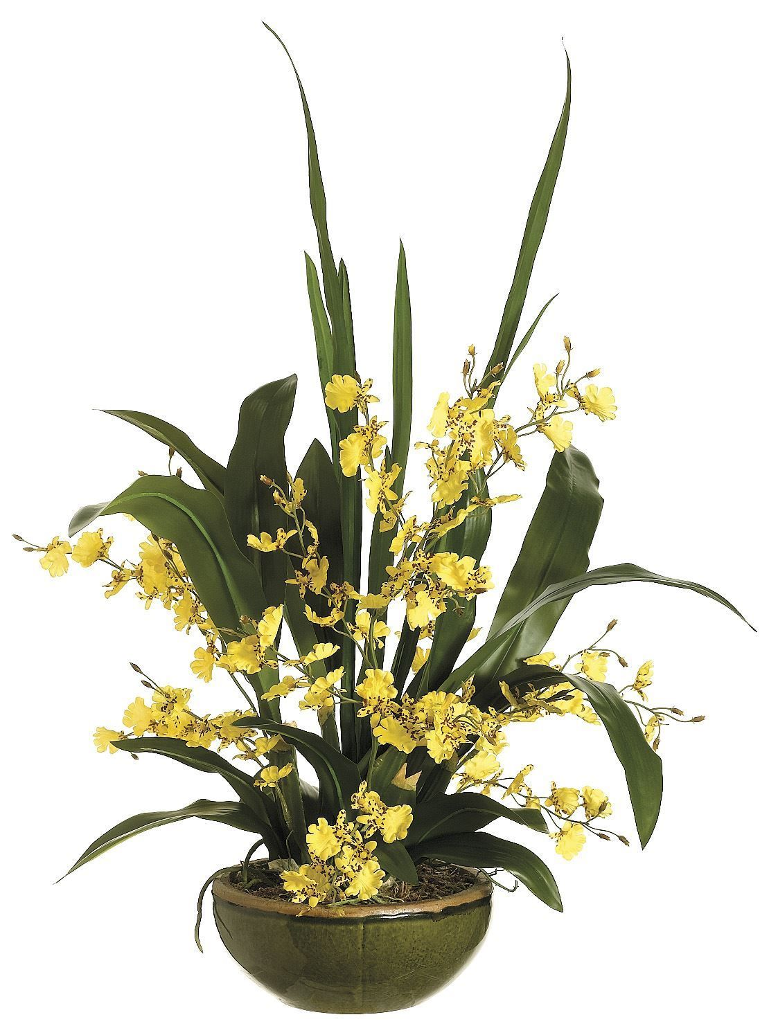 Lifelike Yellow Oncidium Orchid Arrangement In Round Green Textured Ceramic Bowl Orchid Flower Arrangements Oncidium Orchids Orchid Arrangements