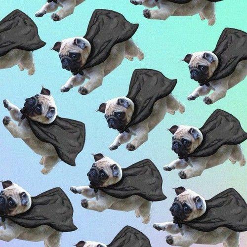 Fly Pug Pinterest Divinewanderer2 Perros Pug Pug Carlino Pug