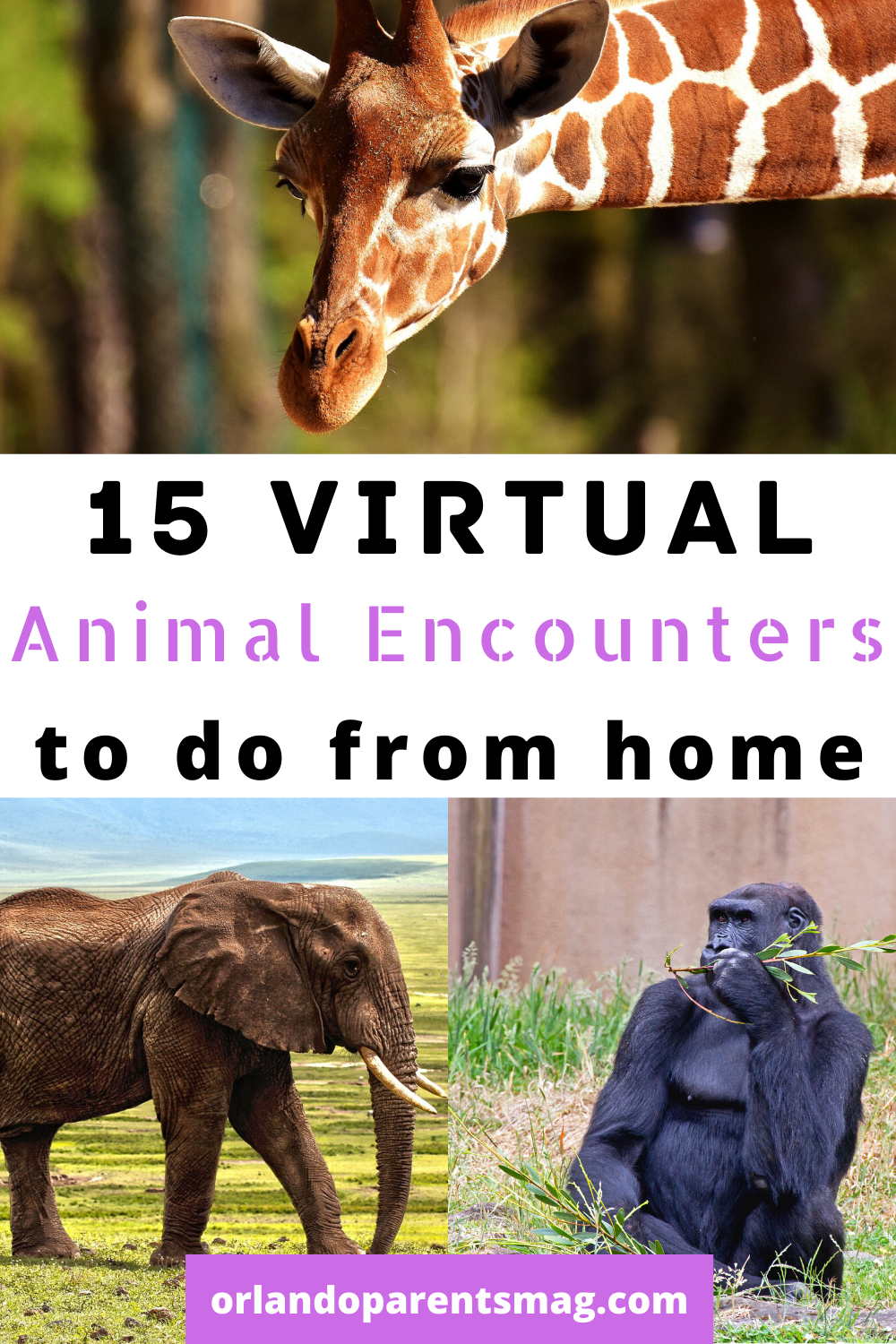 15 Virtual Animal Encounters You Can Do From Home