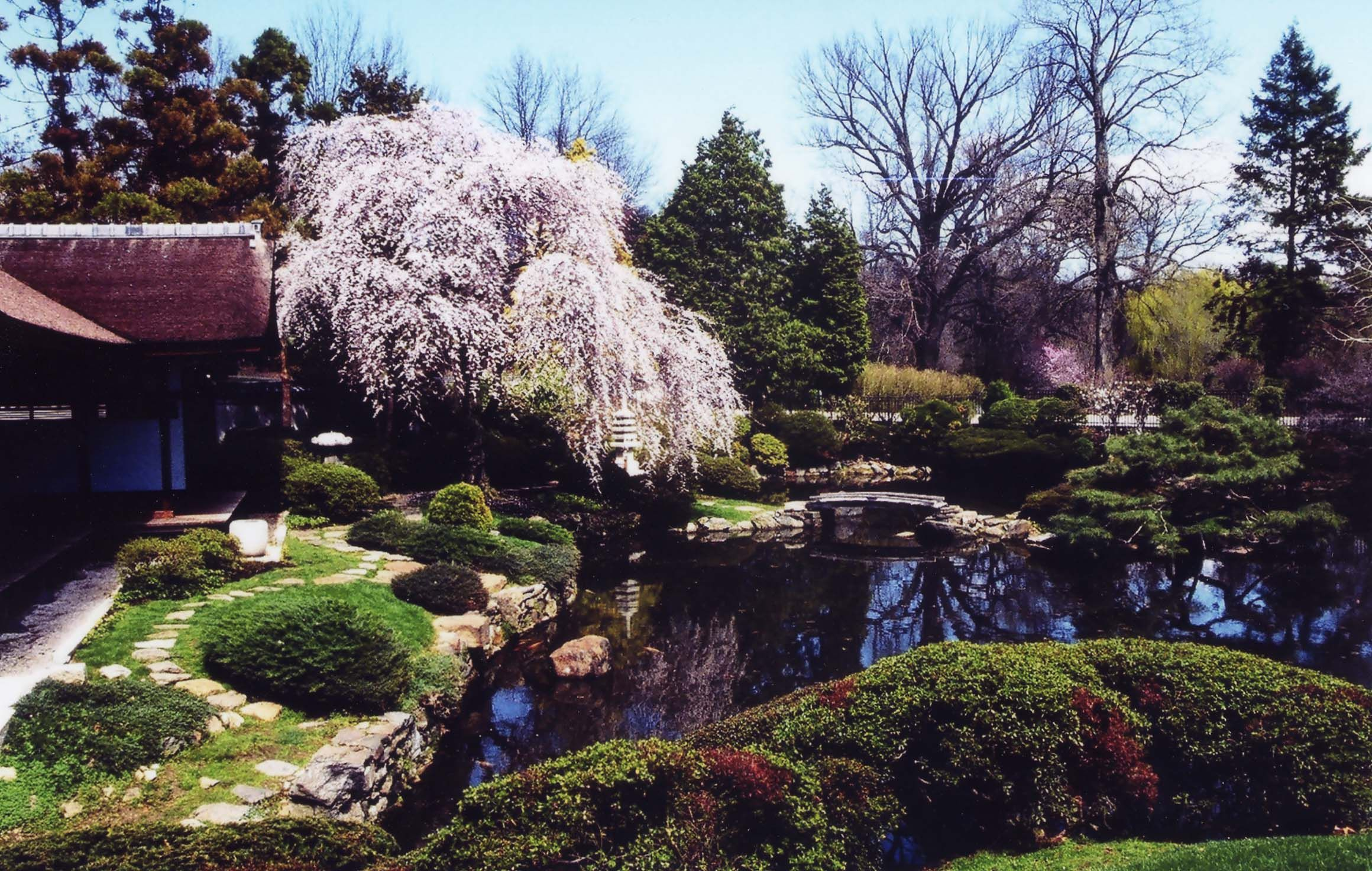 At the Shofuso #Japanese House and Garden one of the most beautiful spots in #Philadelphia - stop by and see it during the Cherry Blossom Festival this ... & At the Shofuso #Japanese House and Garden one of the most beautiful ...