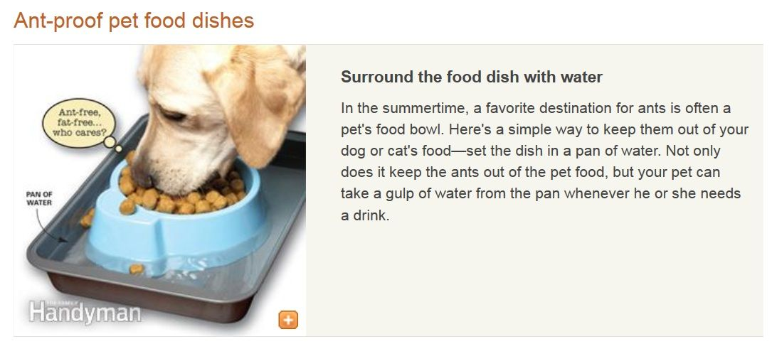 Ant Proof Pet Food Dishes Surround The Food Dish With Water In