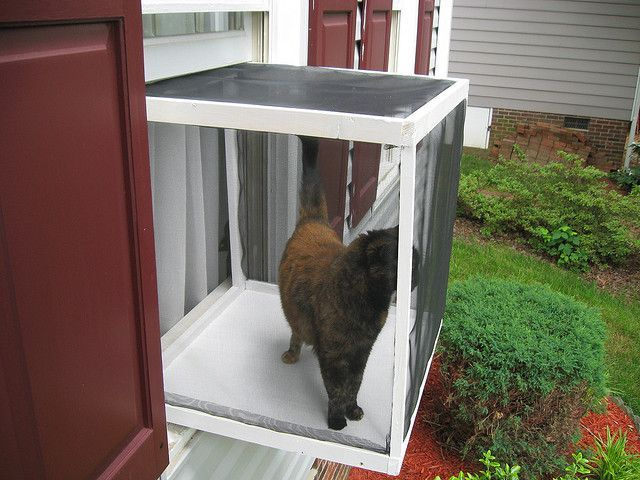 Cat Window Box Great Idea For Keeping Your Kitty Safe