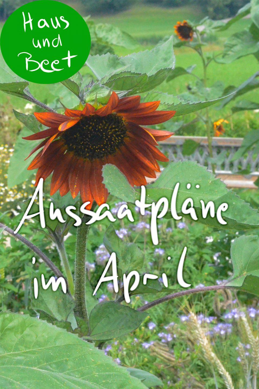 Aussaatpläne im April - Haus und Beet