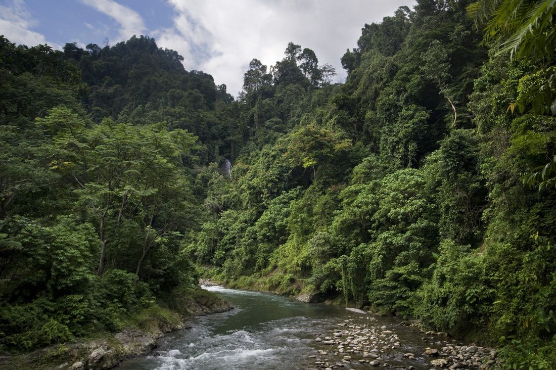 Picture Jungle resort, Borneo, Tropical forest