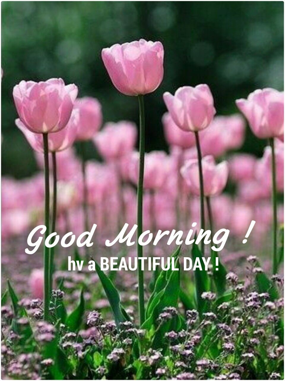 Good Morning With Images Beautiful Flowers Pink Flowers Flowers