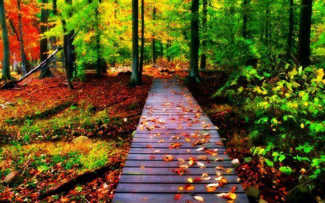 All e de jardin en bois esth tique et facile faire promenade en sous bois jardins en bois - Allee de jardin facile ...