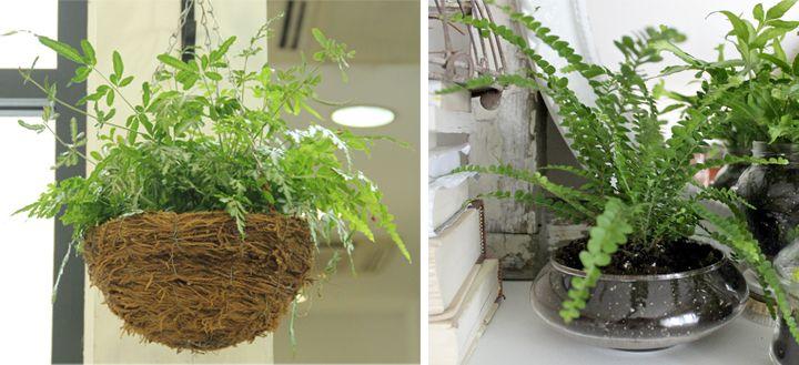 Las mejores plantas para espacios de interior plantas for Mejores plantas para interior