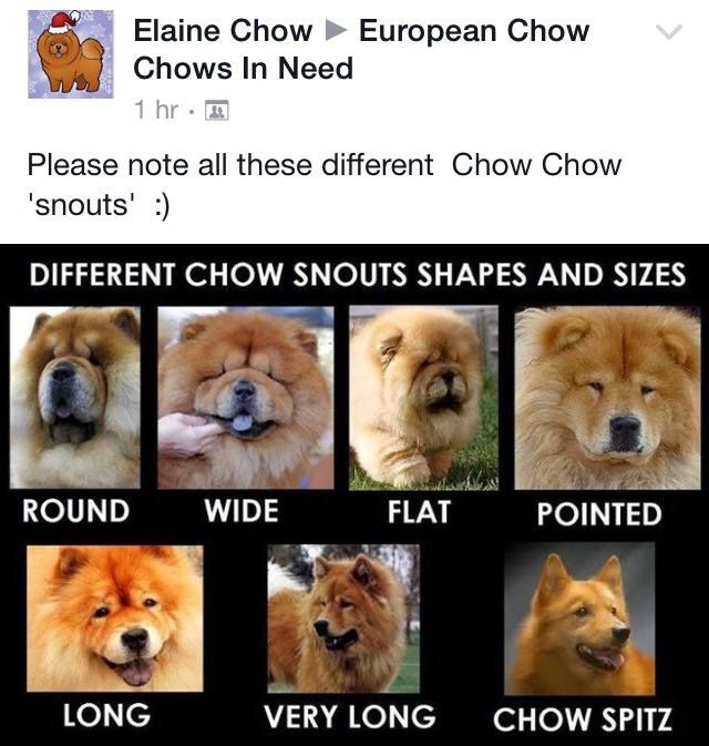 Pin By Gudea On Dogs Chow Chow Chow Chow Puppy Chow Chow Dogs