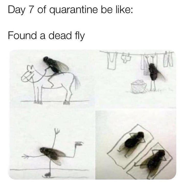 #memes #pewdiepie #granday #meme #pewdiepiememesy #flyingkitty #dolandark #gamers #tiktok #garrysupporter #epic #chungus...