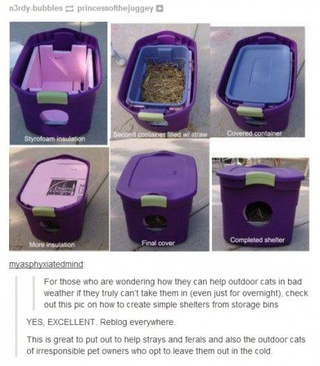 If you feel bad for feral cats but can't take them in...