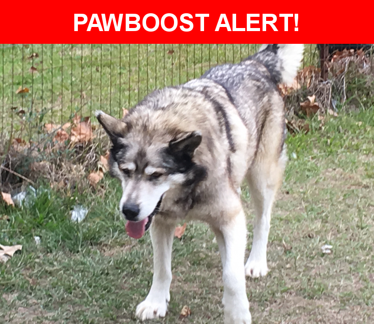 Please spread the word! Rascal was last seen in Magnolia, TX 77353.    Nearest Address: Near Magnolia Blvd & Rl Butler