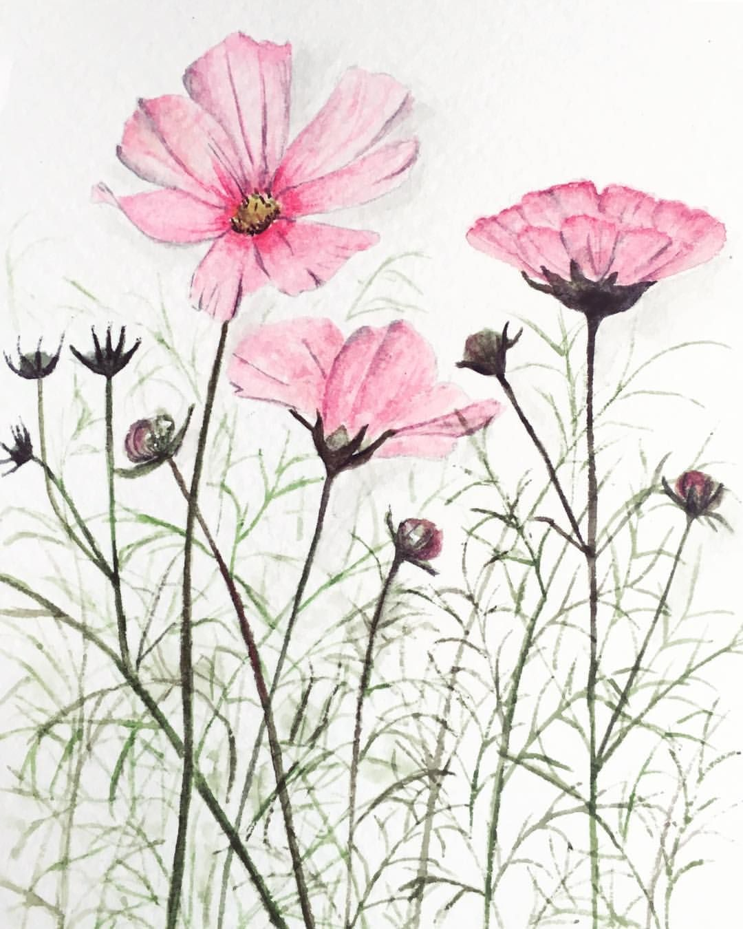Cosmos Flower Love These Pink Flowers With A Dab Of Lavender In It Comefloralwithus With Aquarryl Craftedbydq N Pink Flowers Flowers Teaching Watercolor