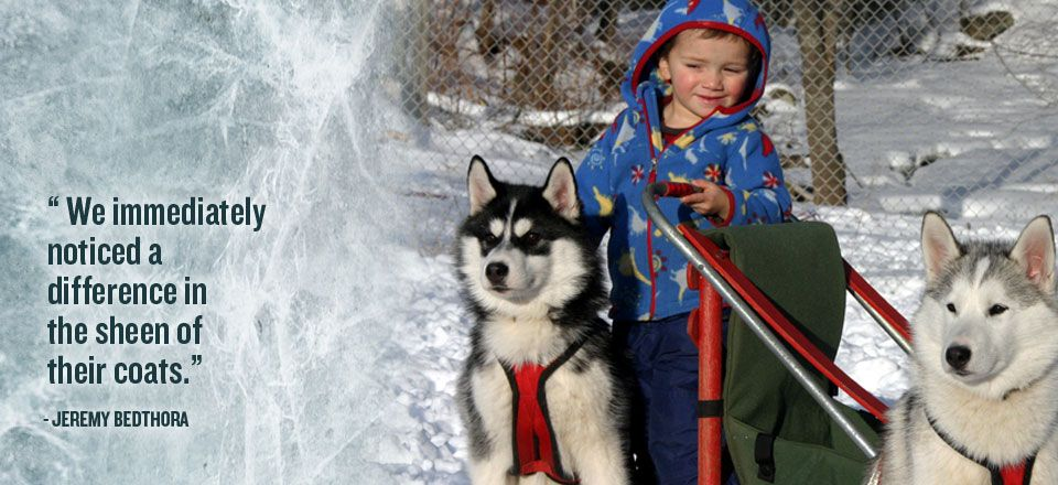 Inukshuk dogs look better dogs working dogs dog sledding