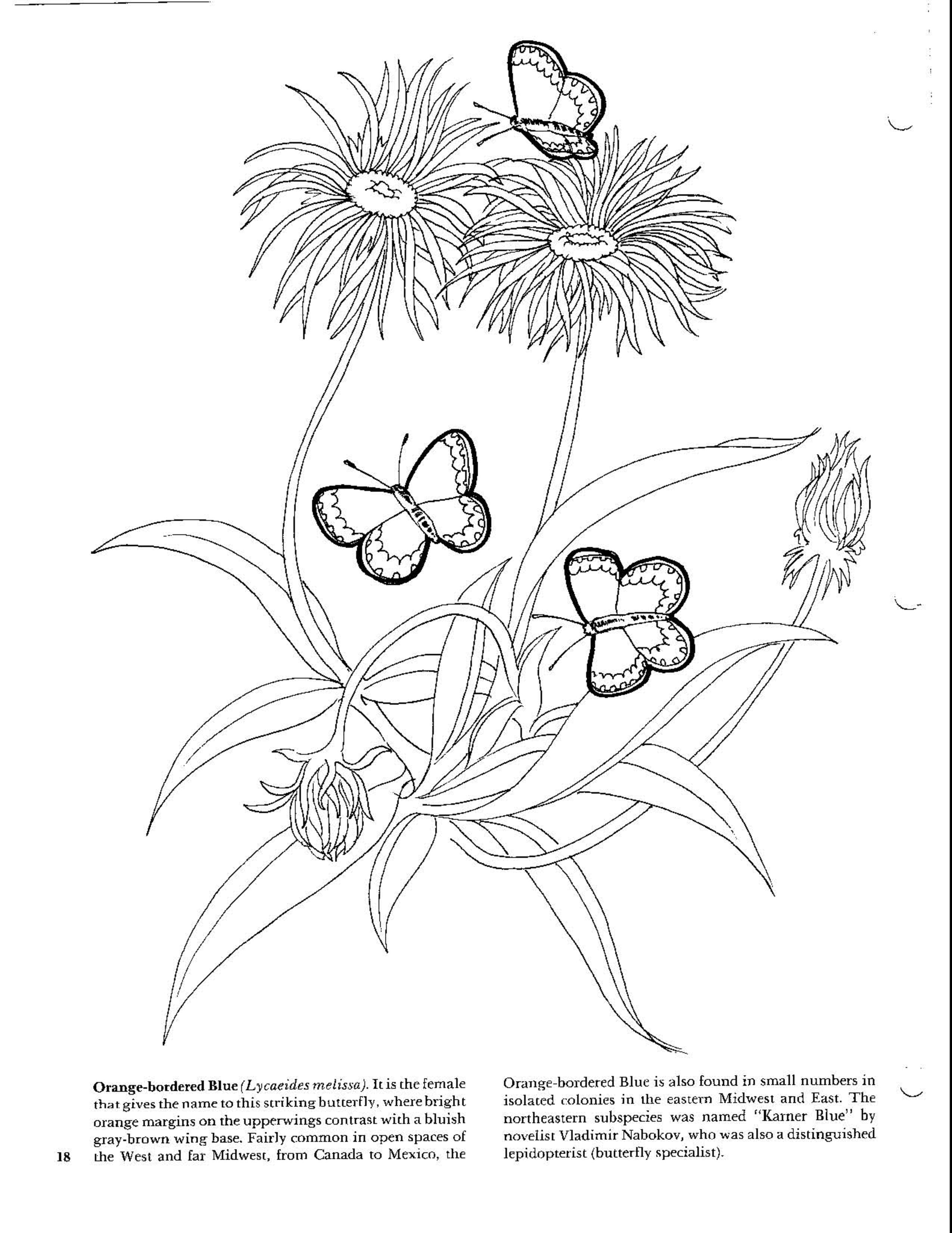 Butterflies Coloring Book Butterfly Coloring Page Coloring Pages Animal Coloring Pages [ 3300 x 2550 Pixel ]