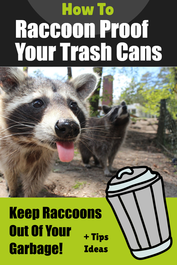 How To Keep Raccoons Out Of Garbage With Raccoon Proof Trash Cans