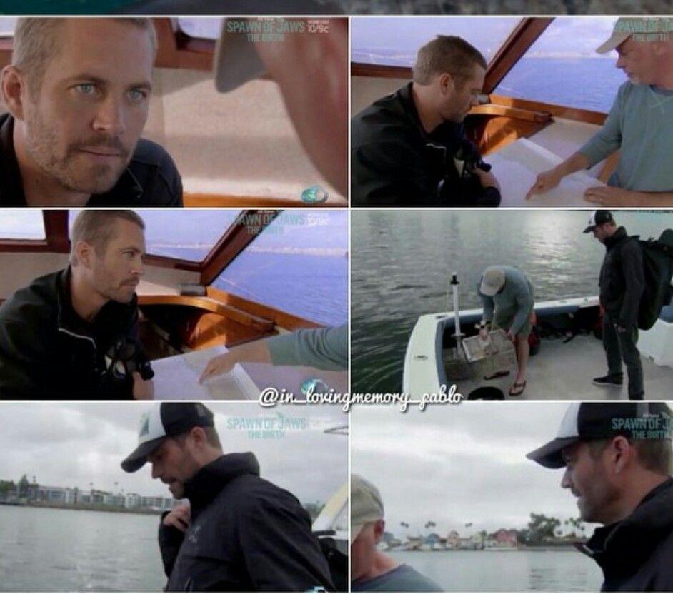 Paul in shark week