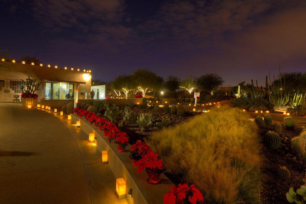 Desert Botanical Garden For Las Noches De Las Luminarias