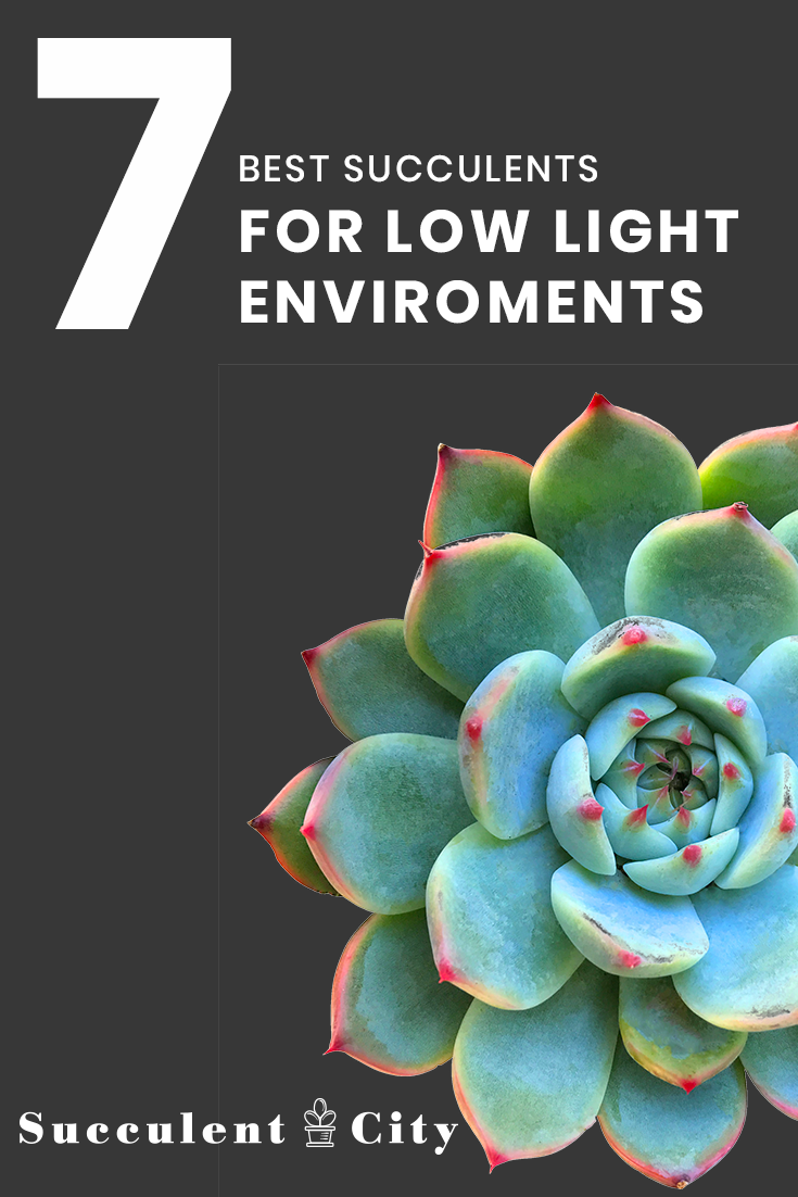 7 Best Succulents For Low Light Environments