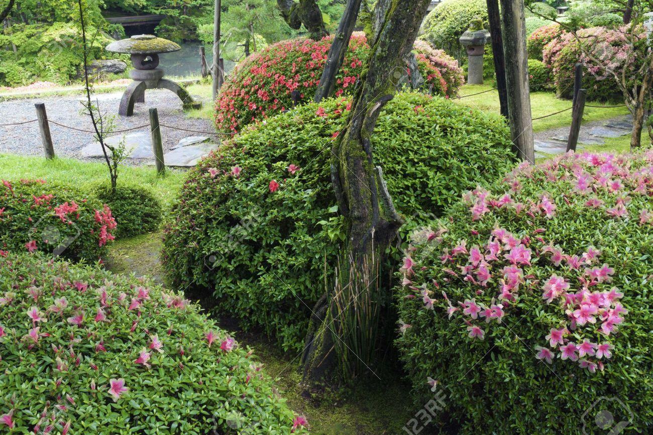 Japanese Zen Garden With Blossom Azalea Bushes By Summer Zen Garden Japan Garden Japanese Garden