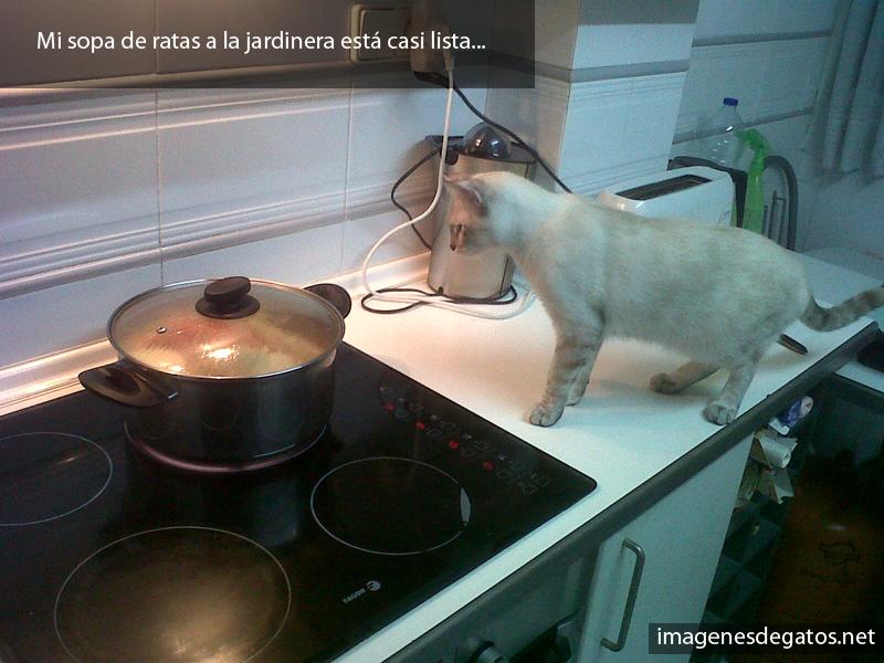 Gato cocinando.