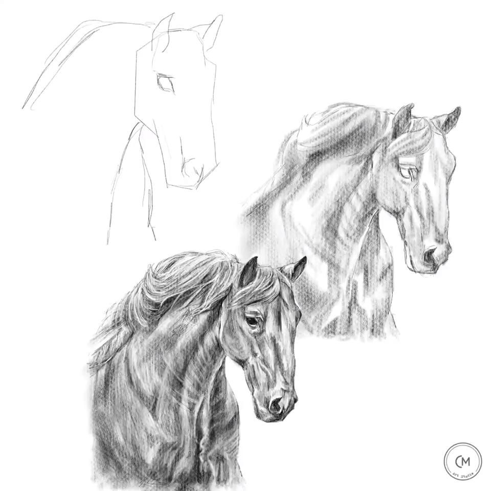 Learning how to draw a horse, animal drawing, art education, art tutorial, digital illustration, pen