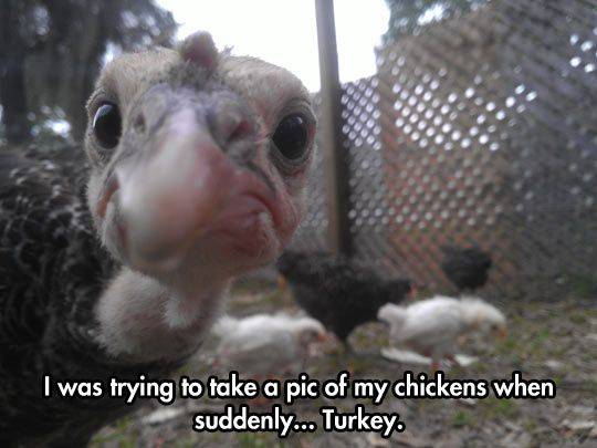 Haha how funny!!!!