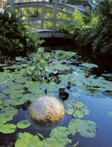 Barley Straw Bales Natural Pond Cleaner Gardeners Com Kert