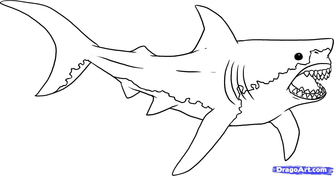 Free Printable Great White Shark Coloring Pages 1437 In Shark