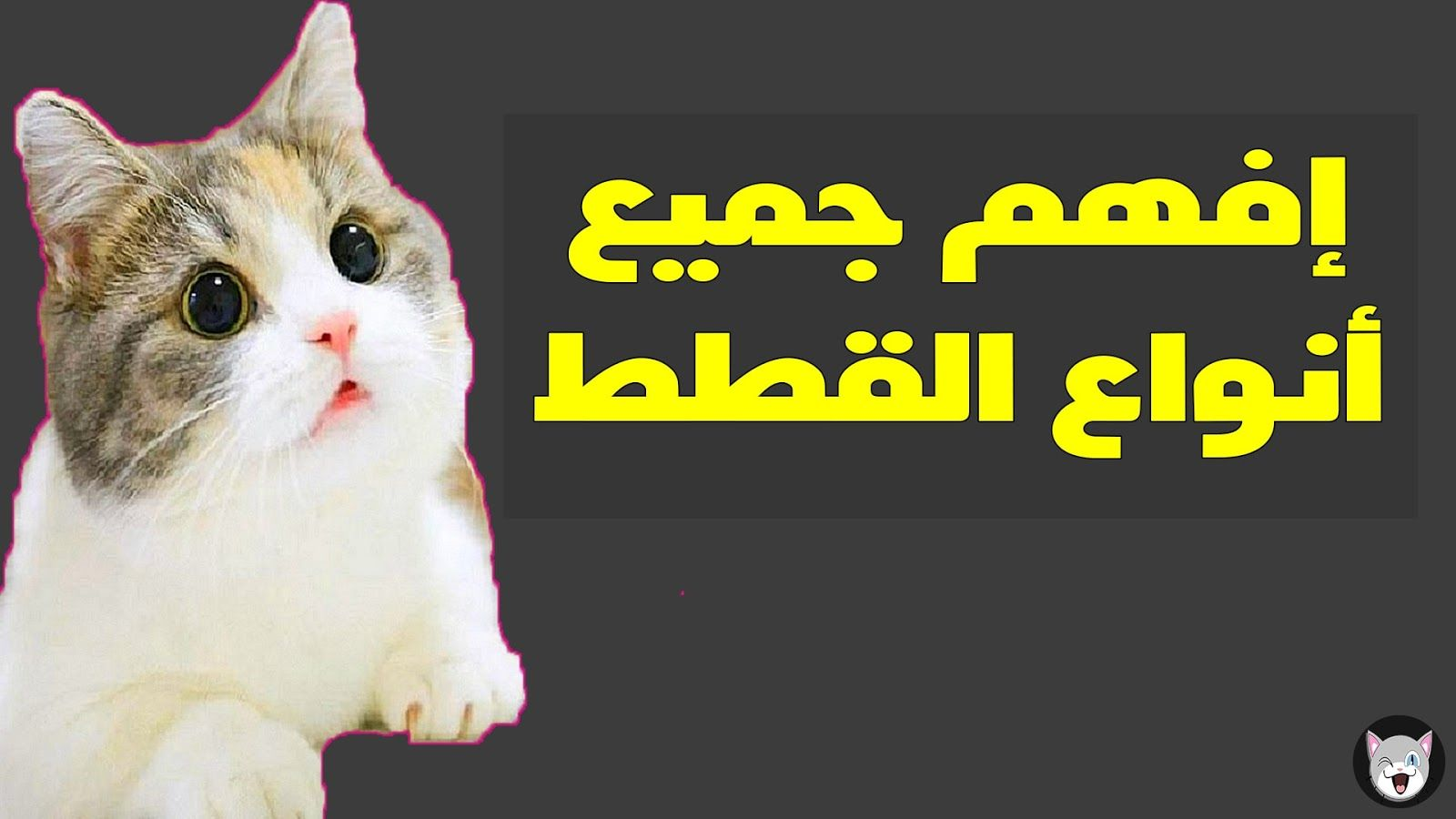 تعلم لغة القطط من خلال فهم أصواتها Cat Language Language Kal