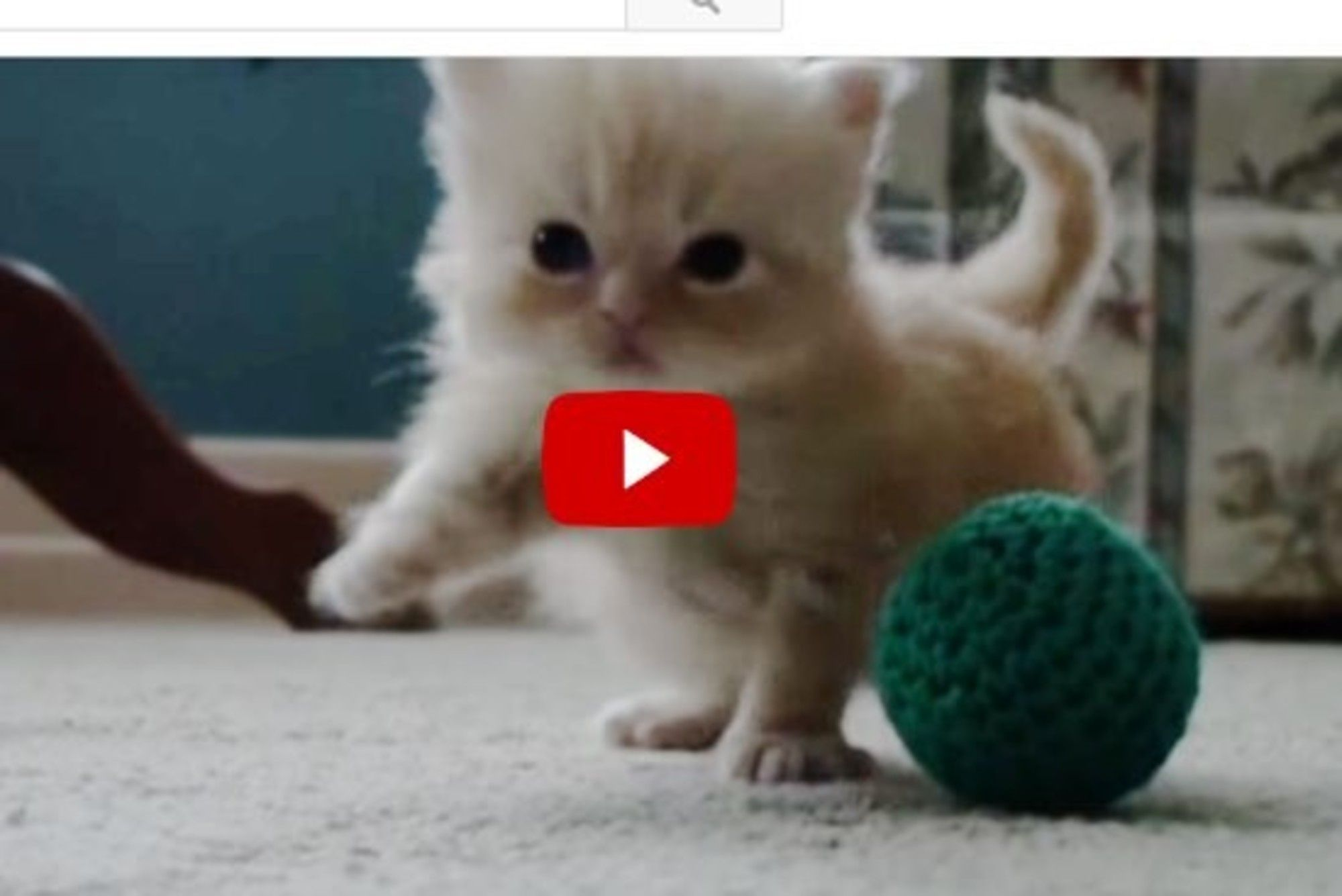 Copper The Little Ball Of Fluff Is Learning How To Walk Tiny Kitten Kitten Cat Love