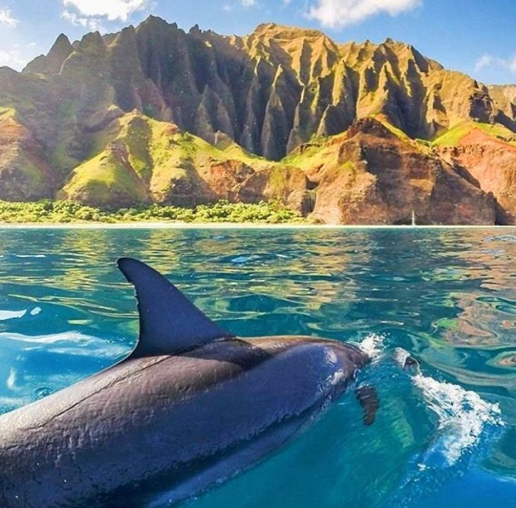 Imagine being this close to a dolphin.. in Kuai Hawaii [by @hidrivephoto]