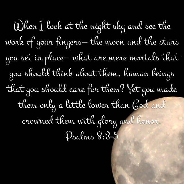 Psalms 8 3 5 New Living Translation Nlt Psalms Torah Study Book Of Psalms