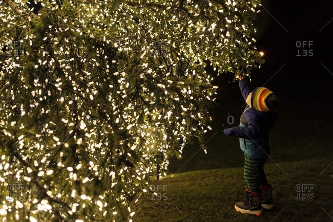Boy reaching up to an evergreen tree covered in white twinkle lights