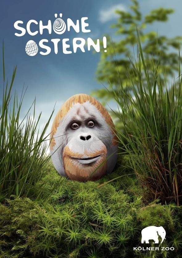 Zoo cologne ape advertising agency preuss und preuss for Grafikdesign koln