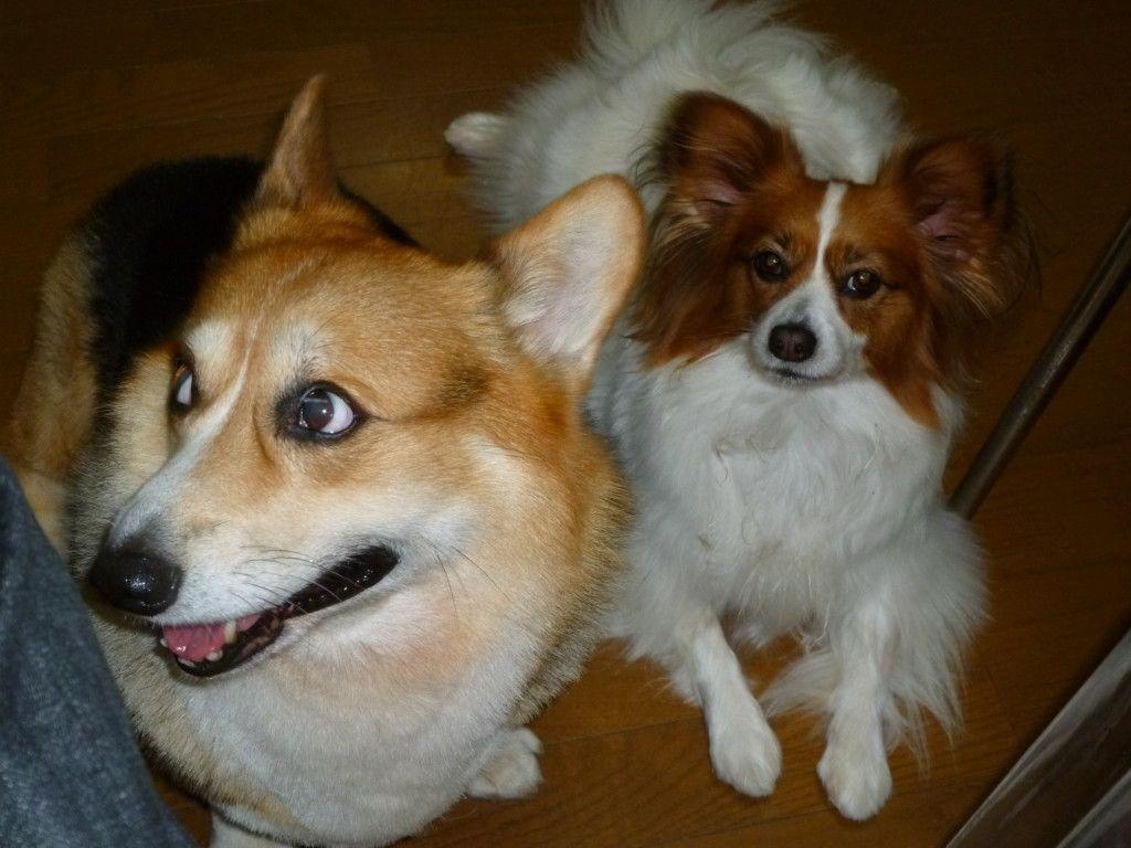 愛犬が虫 トカゲ セミ バッタ カマキリなど を食べたけど大丈夫 トカゲ 犬 バッタ